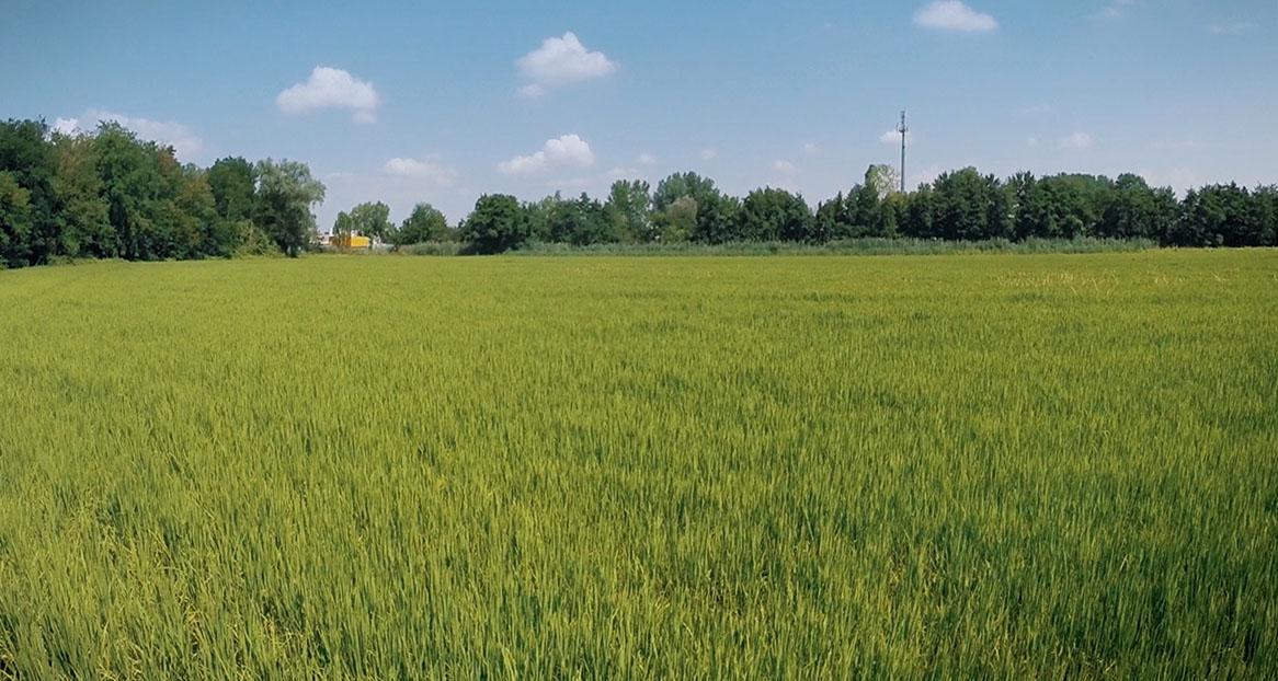 Casa Agricoltura - Immagine campo coltivato